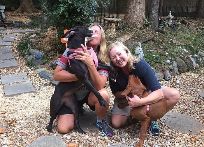 Hugging Dogs Find A New Home Thanks To The Internet (4 pics)