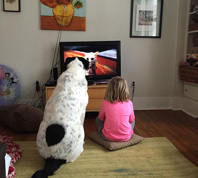 The Love Of A Dog Is A Great Gift To Give Your Child (20 pics)