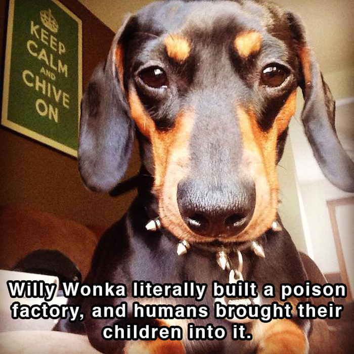 Hilarious Thoughts That Dogs Have In The Shower (18 pics)