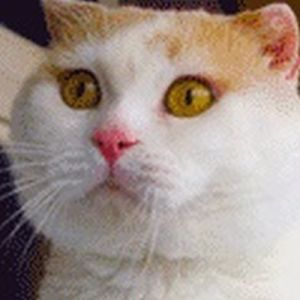 This Cat Just Can't Keep Its Emotions In Check (22 gifs)