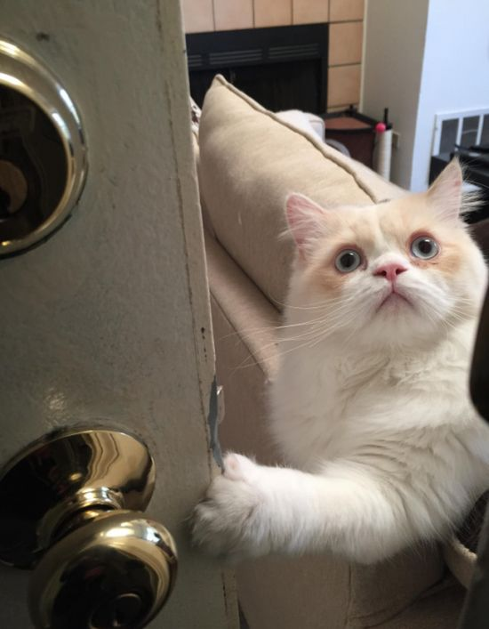 This Cat Really Doesn't Want Its Owner To Go To Work (3 pics)