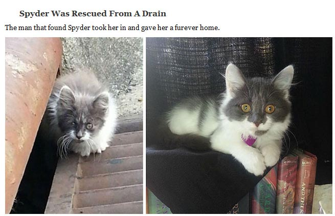 Heartwarming Photos Of Rescued Cats Before And After (20 pics)