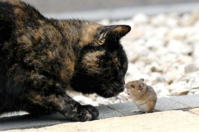 This Cat And Mouse Have A Relationship That Will Surprise You (14 pics)