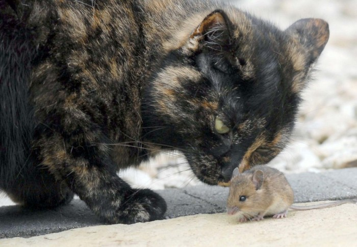 cat and mouse relationship meaning of