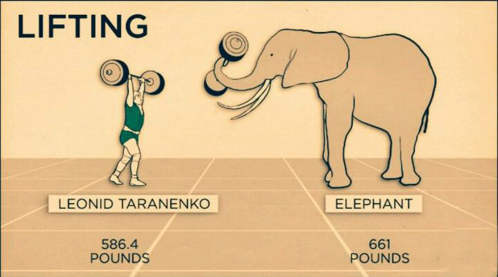 Animal Speeds And Strengths Compared To Humans (4 pics)