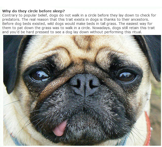 Everything You Ever Wanted To Know About Dogs (9 pics)