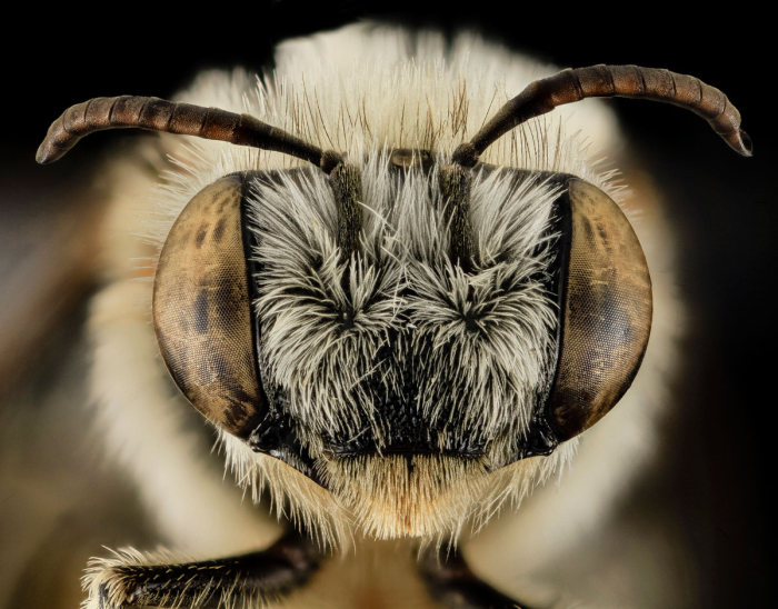 These Incredible Close Ups Show Insects In A Different Light (25 pics)