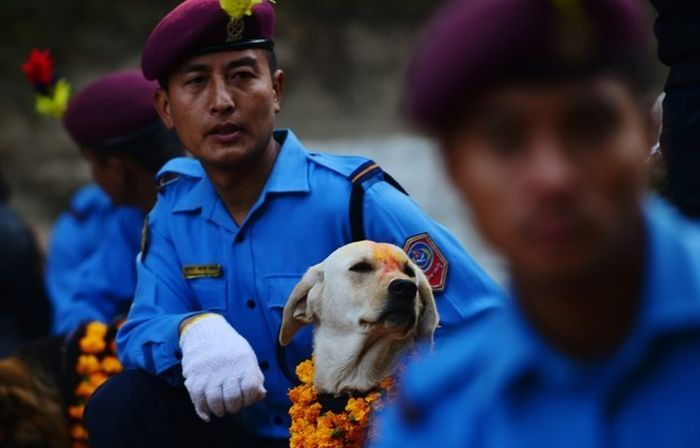 Nepal Has An Entire Festival That's All About Celebrating Dogs (9 pics)