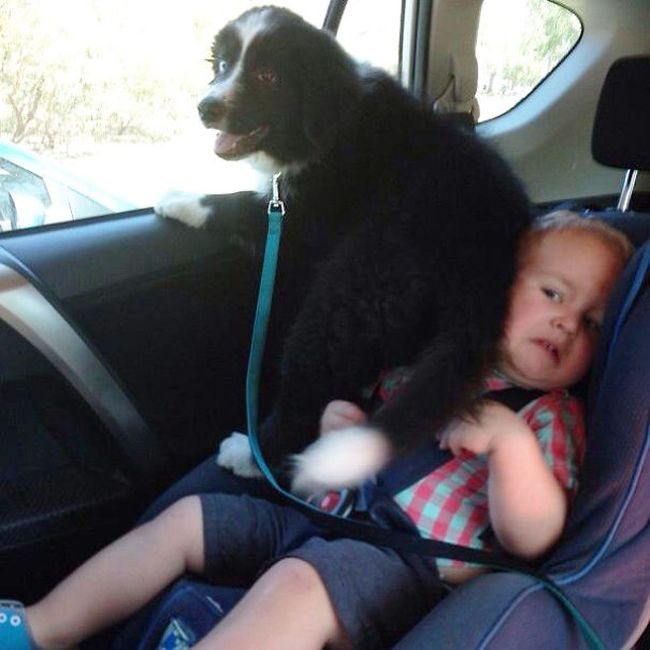These Dogs Would Be Happy To Invade Your Personal Space (36 pics)