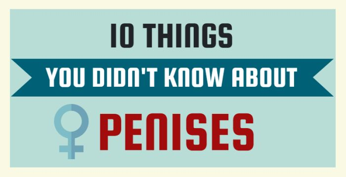 10 Important Things You Probably Didn't Know About Penises (infographic)
