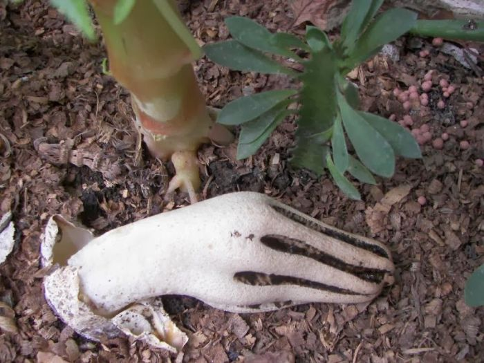 Watch Out For The Devil's Fingers In The Forest (4 pics)