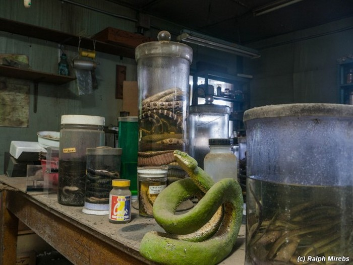 Japan Has A Room Filled With Dead Snakes (34 pics)