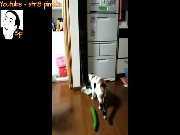 Cats Scared Of Cucumbers