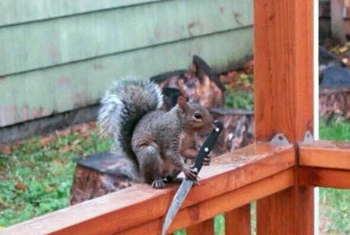 This Dangerous Squirrel Is Ready To Cut You (2 pics)