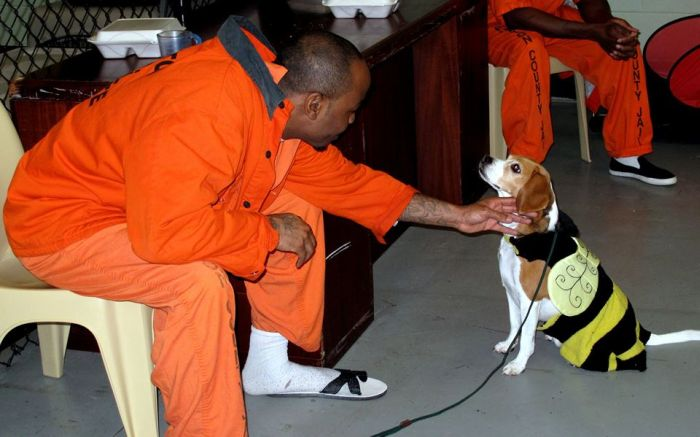 New Program Pairs Prisoners With Shelter Dogs (7 pics)