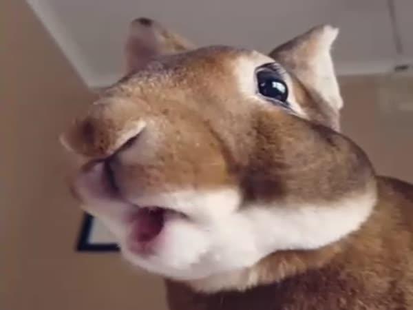Cute Rabbit Chews