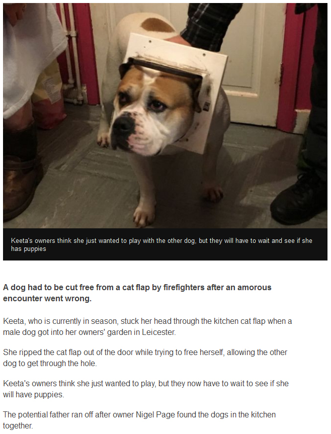 Dog Has To Have Cat Flap Removed After Getting Its Head Stuck (3 pics)