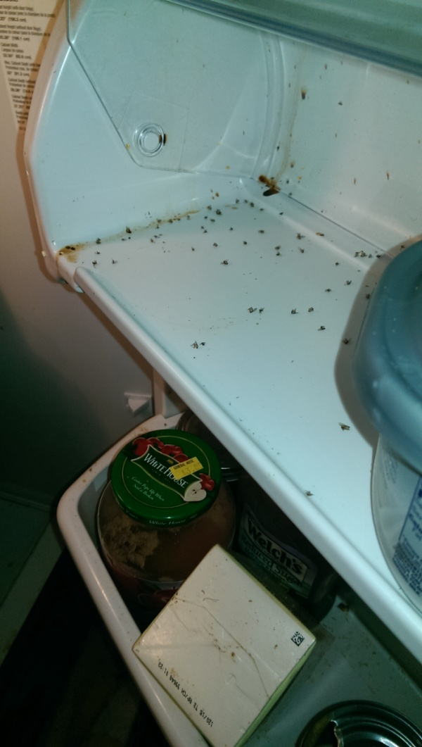 There's Definitely Something Living In This Fridge (7 pics)