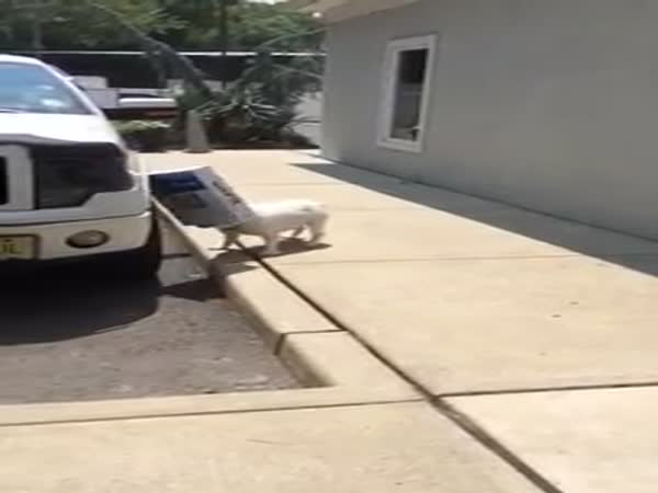 Stupid Bulldog With Box