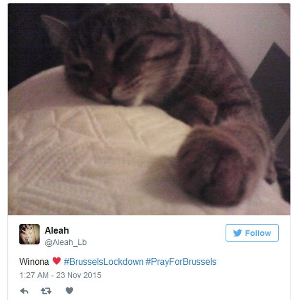 Brussels Is Using Pictures Of Cats To Confuse ISIS (12 pics)