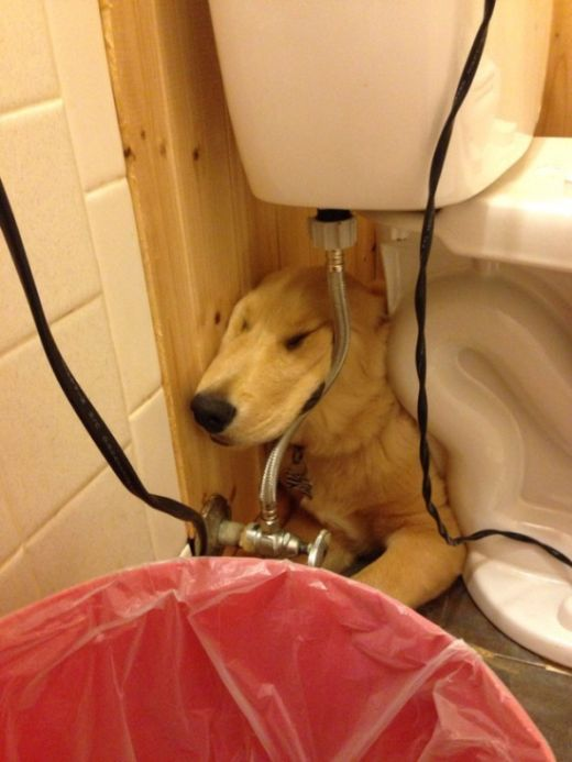 Say Hello To The 32 Most Awkward Dogs Of 2015 (32 pics)