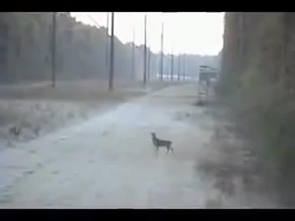 Hunter And Stupid Deer