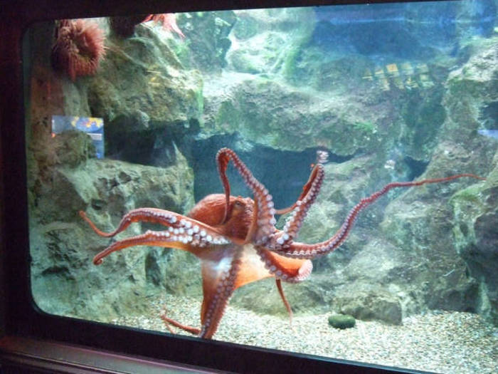 Interesting Facts You Probably Didn't Know About The Octopus (29 pics)