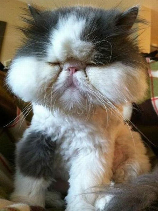 Cats Have Interesting Reactions To Bee Stings (20 pics)