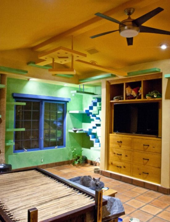 This House Is A Cat's Dream Come True (8 pics)
