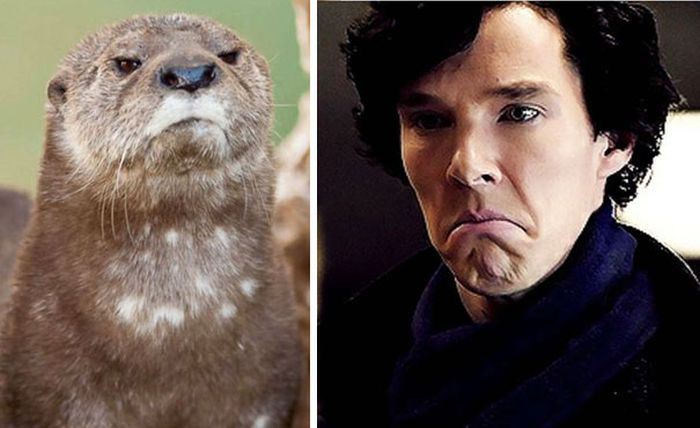 Undeniable Proof That Benedict Cumberbatch Is Definitely An Otter (22 pics)