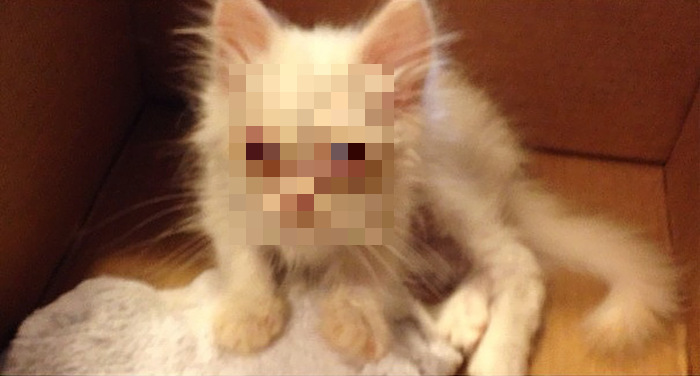 Family Adopts Fluffy Kitten From The Side Of The Road (11 pics)