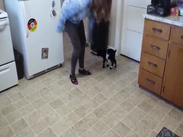 Baby Pygmy Goat Copies Hopping