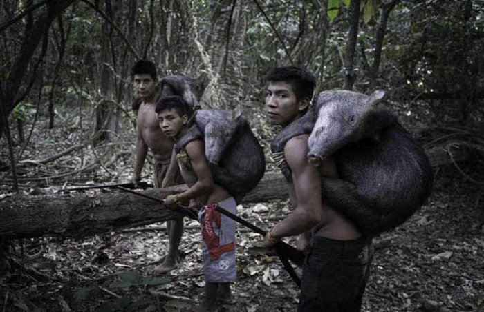 This Rare Amazonian Tribe Lives Among The Animals (17 pics)