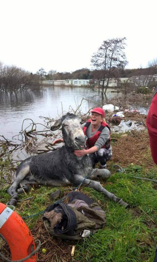 Donkey Gets Rescued During Big Flood In Ireland (2 pics)