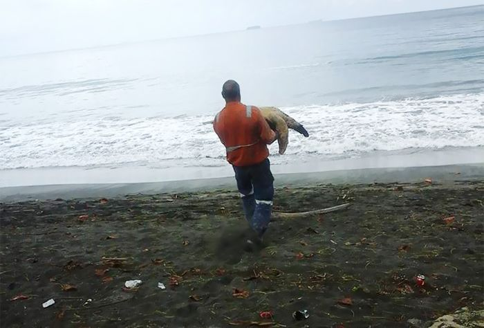 Man Purchases Sea Turtles So He Can Set Them Free (4 pics)