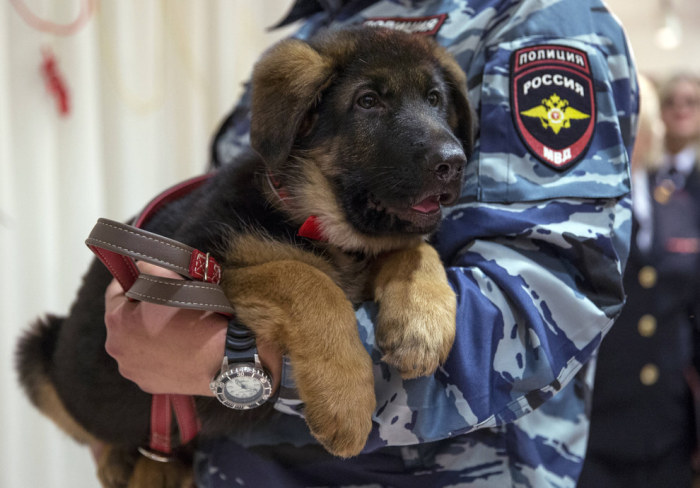 Russia Gives Paris A Puppy In Response To Recent Attacks (5 pics)