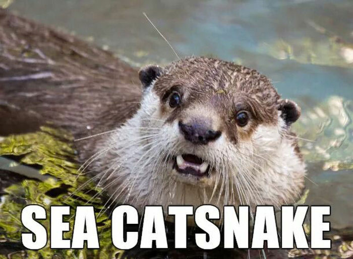 Alternate Names For Animals That We Should Consider Using (29 pics)