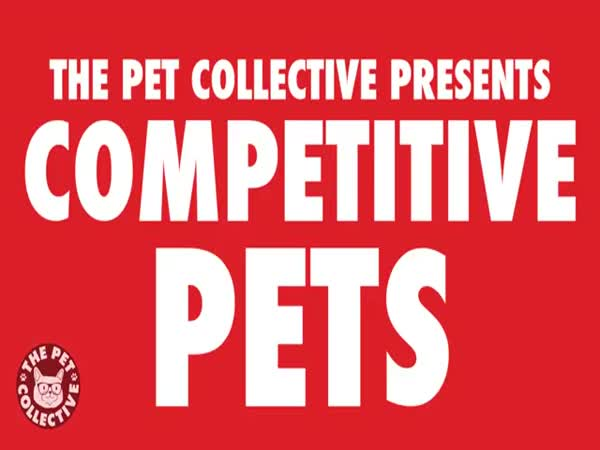 Ultimate Pet Competitions Competitive Pets