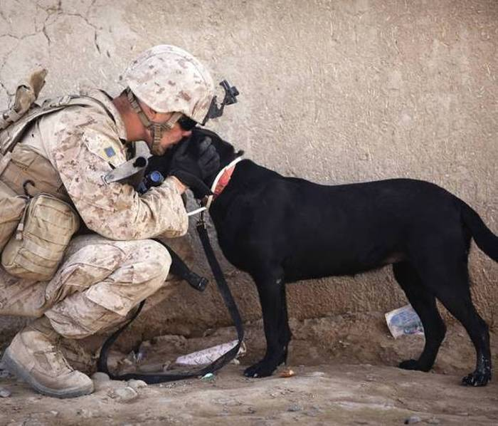 A Day Inside The Life Of A Military Dog (73 pics)