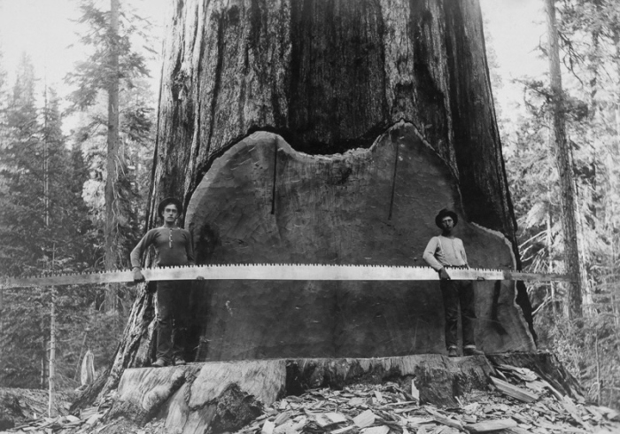 Vintage Photos Of US Loggers Doing What They Do Best (15 pics)