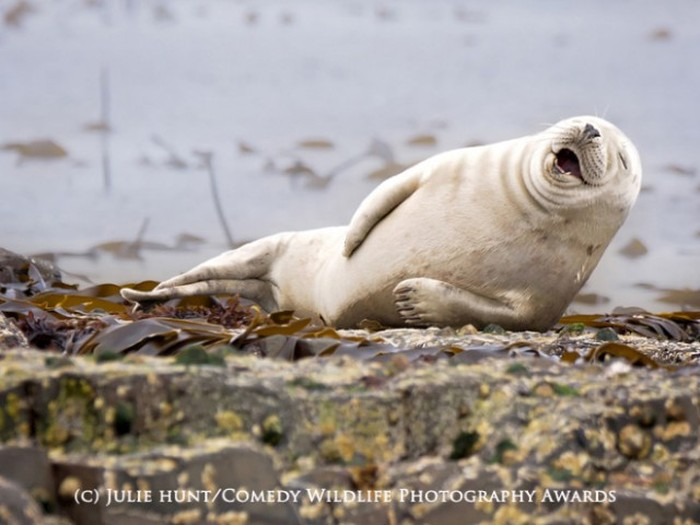 All Of The Best Pictures From The Comedy Wildlife Photography Awards (19 pics)