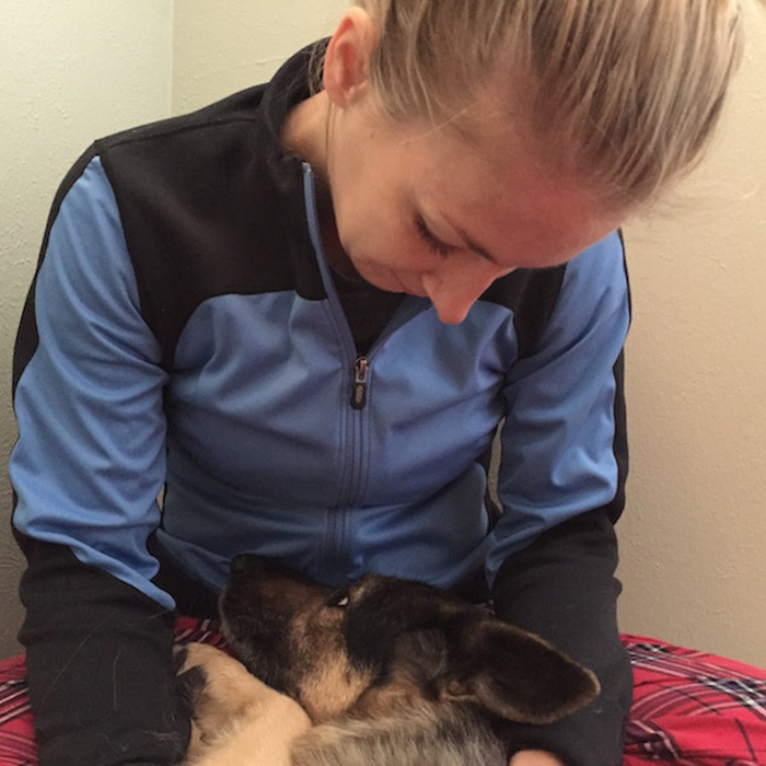 German Shepard Tells The Story Of Her Last Day On Earth (20 pics)