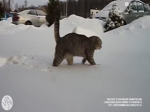 Animals And Snow