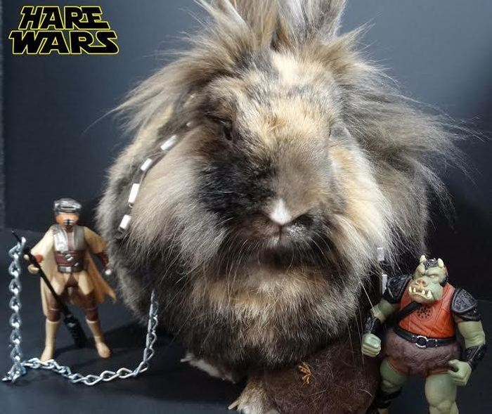 Chewbacca Gets Replaced By A Bunny For Hare Wars (10 pics)