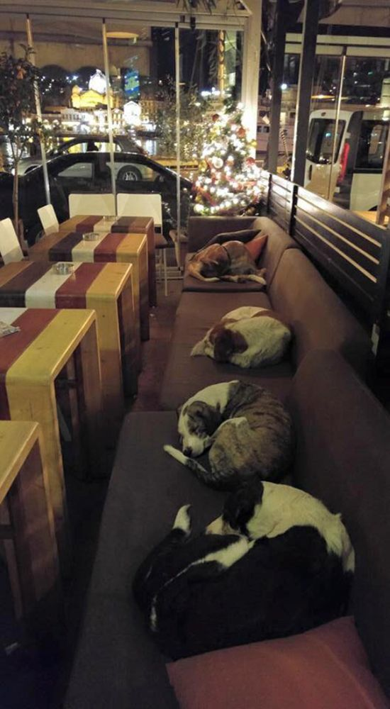 This Coffee Gives Stray Dogs A Safe Place To Sleep (3 pics)