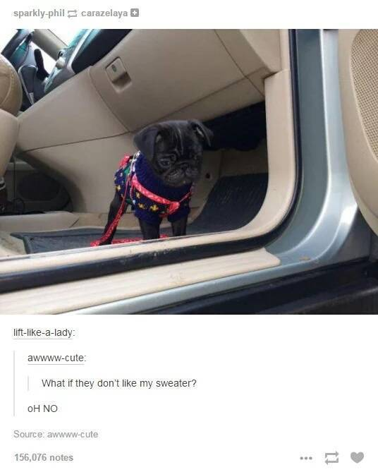 The Funniest And Most Outrageous Posts About Animals In The History Of Tumblr (30 pics)