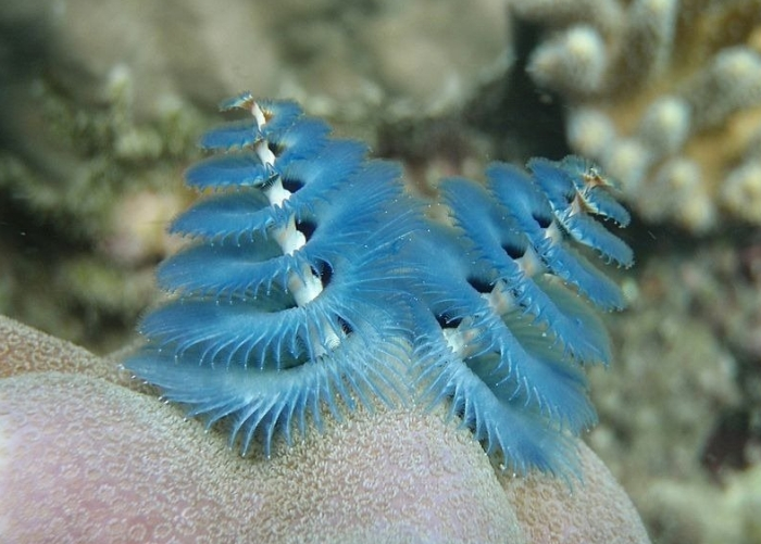 These Worms Look A Lot Like Christmas Trees (10 pics)