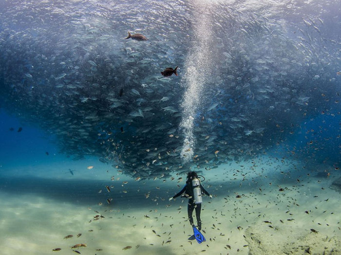 These Are The Top 20 National Geographic Photos Of 2015 (20 pics)