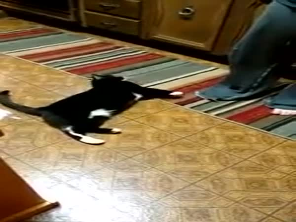 You Probably Dont Think You Can Train A Cat But This Lady Proves That Its Possible