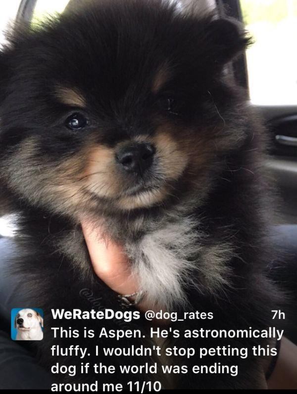 We Rate Dogs Is The Twitter Account The Animal Kingdom Needed (18 pics)